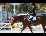 Laurie & Decorus - Dressage at Devon
