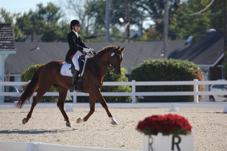 Dressage At Devon 2014: Decorus  Fourth Level